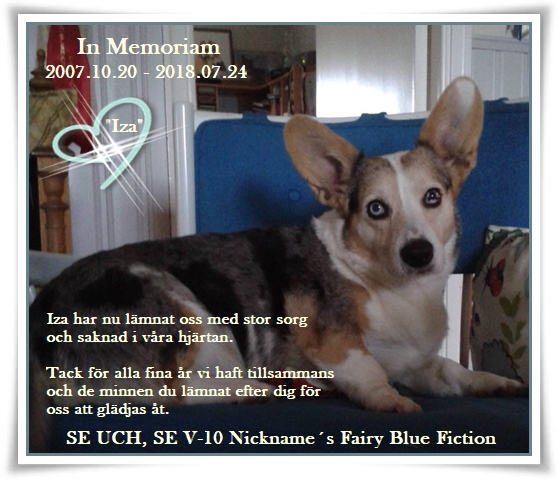 With sadness in my heart, I get to announce that Iza (CH Nickname´s Fairy Blue Fiction) is no longer with us any more.  e. MultiCH Nickname´s Blue Connection To Cardax u.SE UCH Verdidas Glaxa Iza har varit utställd  vid 49 tillfällen och erövrat sammanlagt 42 CK och därefter 5 Cert, BIR 8 ggr/BIM 5ggr, CACIB 5st/R-CACIB 8st. Svensk vinnare 2010.