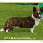kerman captain Jack