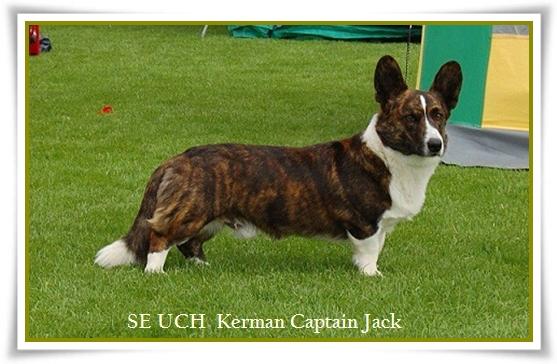 kerman captain Jack